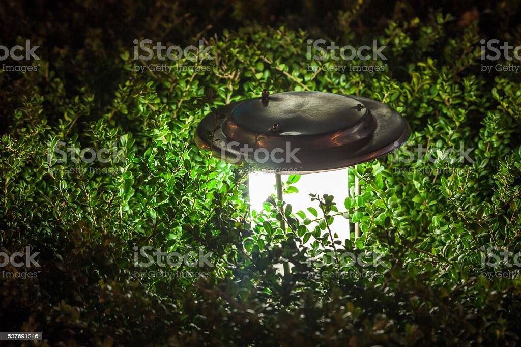 lamp in the trees at night stock photo