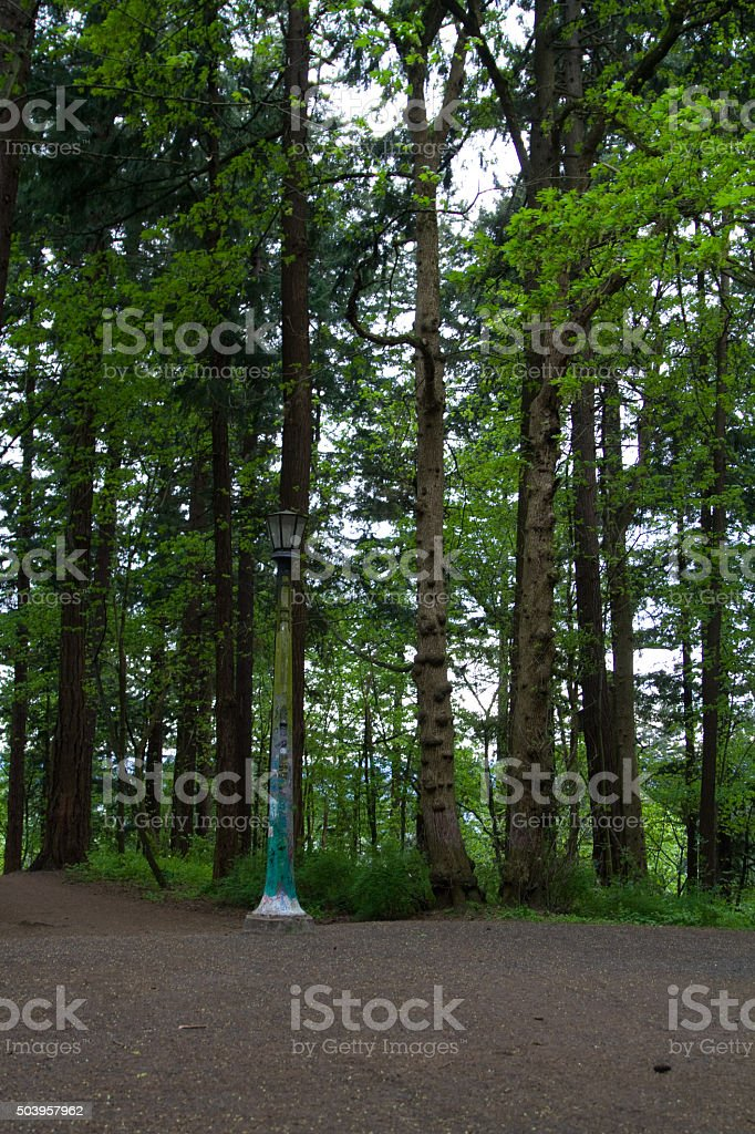 Lamp post seperating the trail stock photo