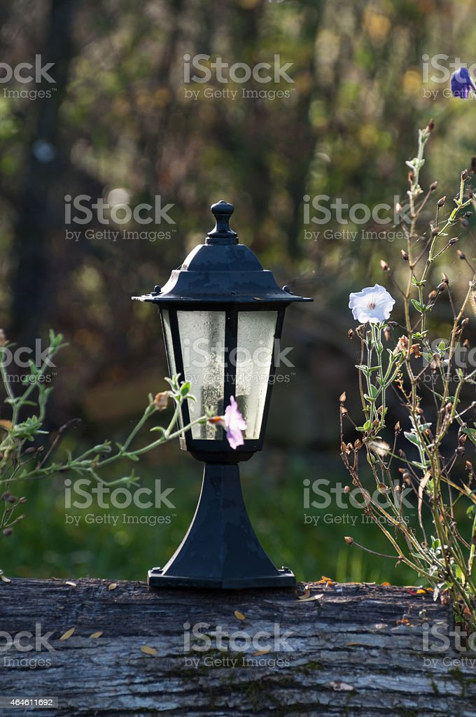 lamp surrounded by flowers royalty-free stock photo