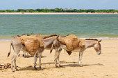 Lamu archipelago in Kenya