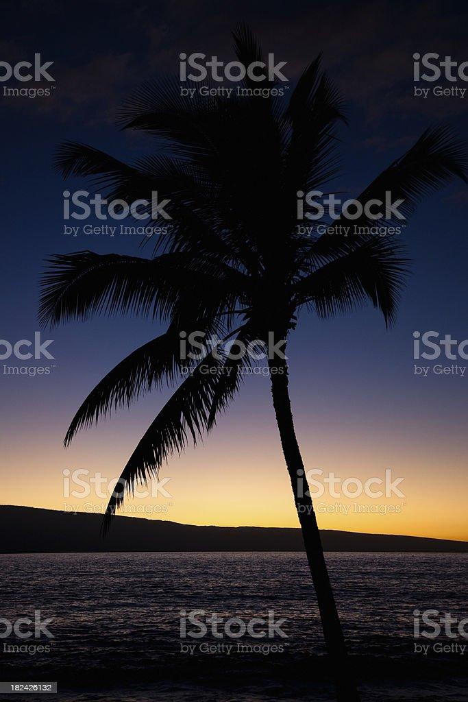 Lanai Sunset Palm Tree Silhouette royalty-free stock photo