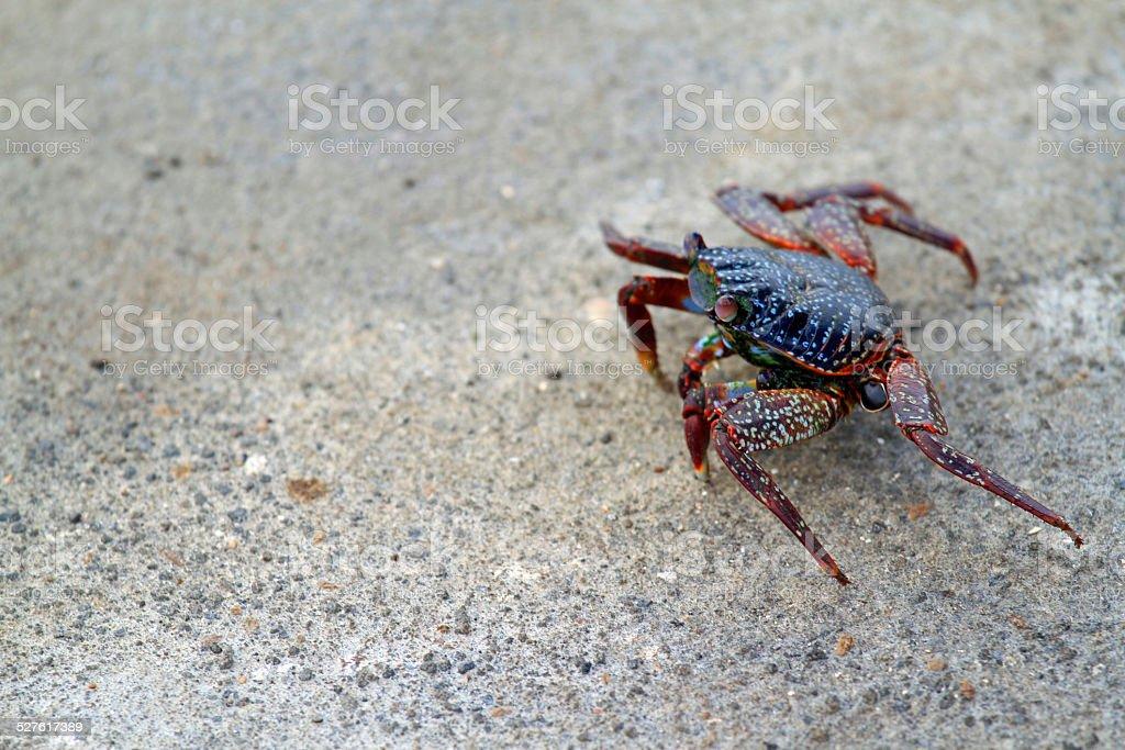 Land Crab stock photo