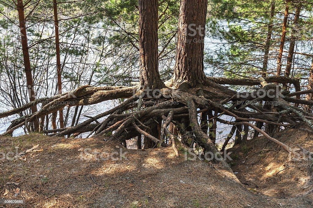 land erosion - bizzare landscape of the tree roots stock photo
