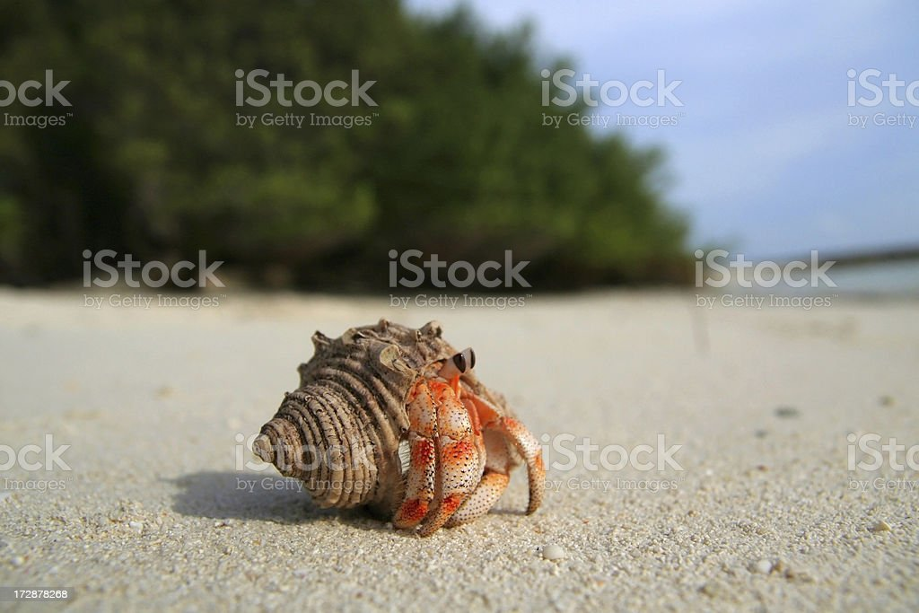 Land Hermit Crab stock photo