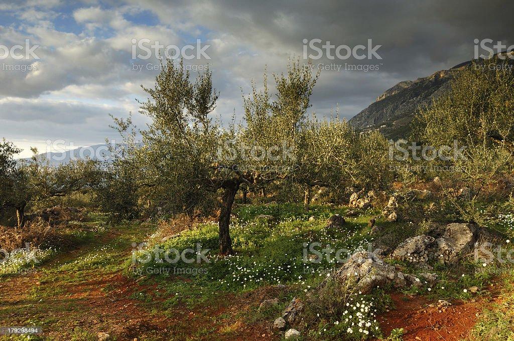 Land of Messinia stock photo