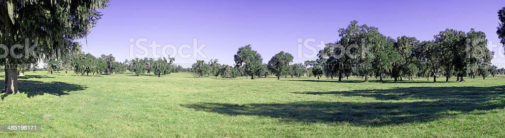 Land of Oaks stock photo