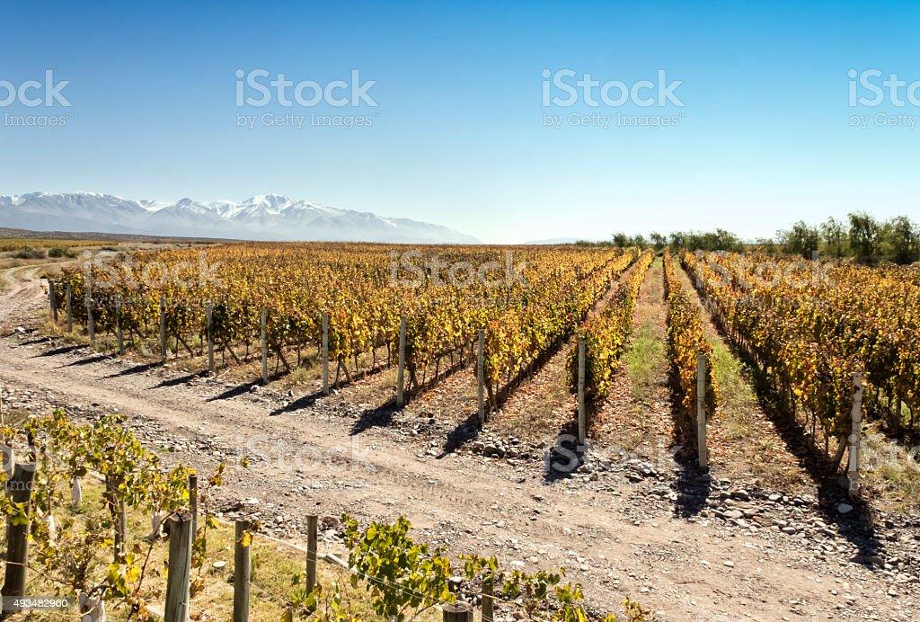 Land of vineyards stock photo
