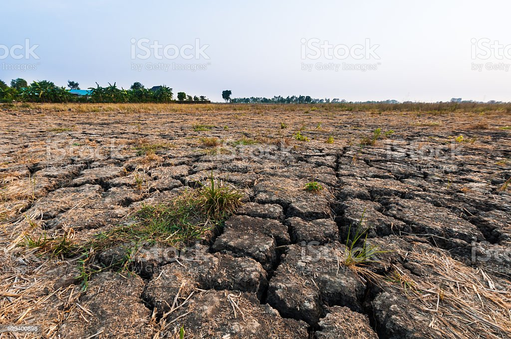 Land with dry and cracked ground. stock photo