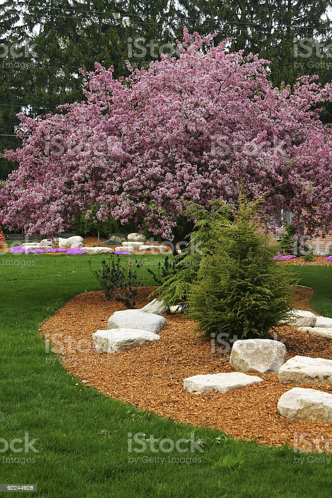 Landcaped Lawn and Blooming Tree royalty-free stock photo