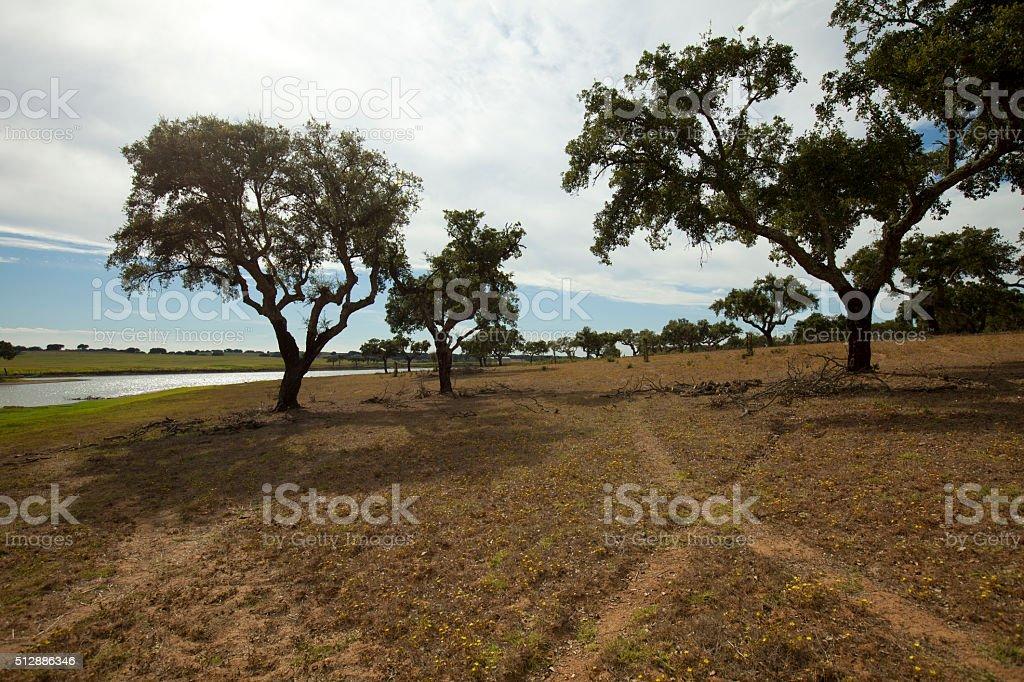 Landescape of Alentejo stock photo