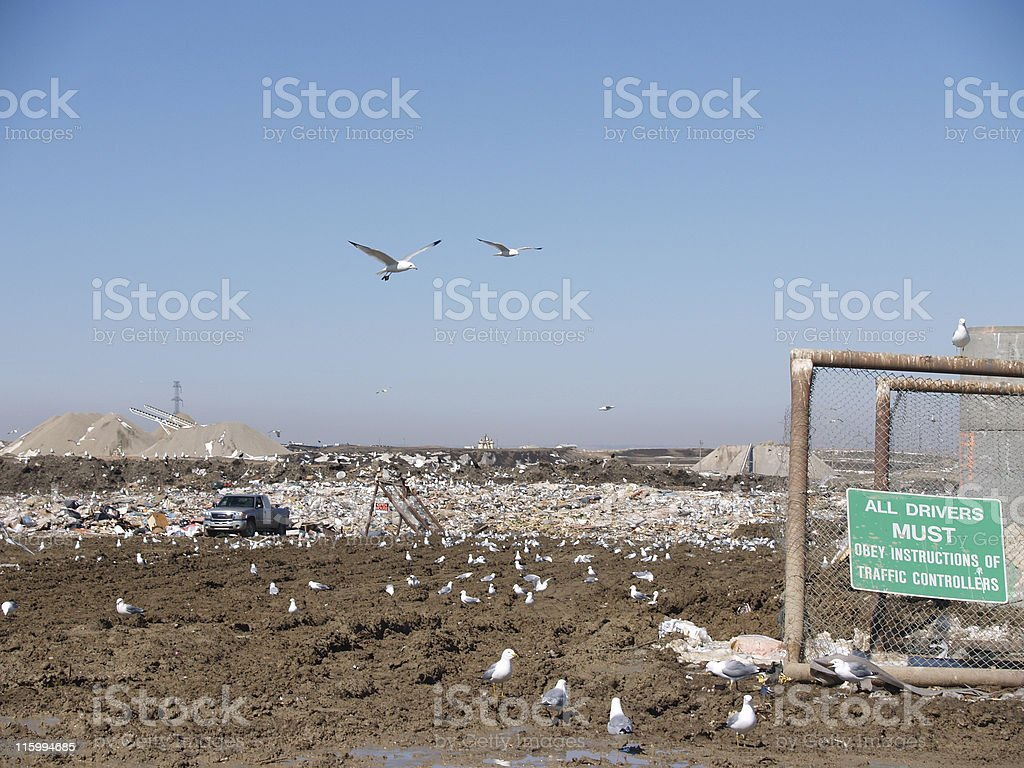 Landfill - Muddy, Seagulls, Windtrap royalty-free stock photo