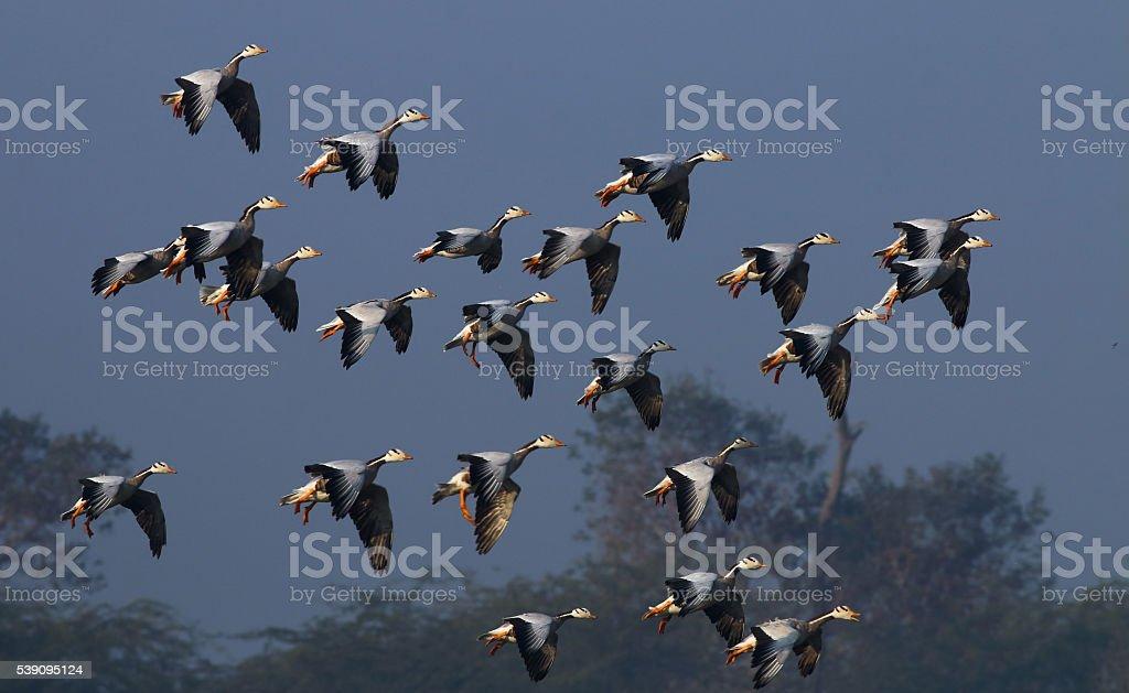 Landing mode On stock photo