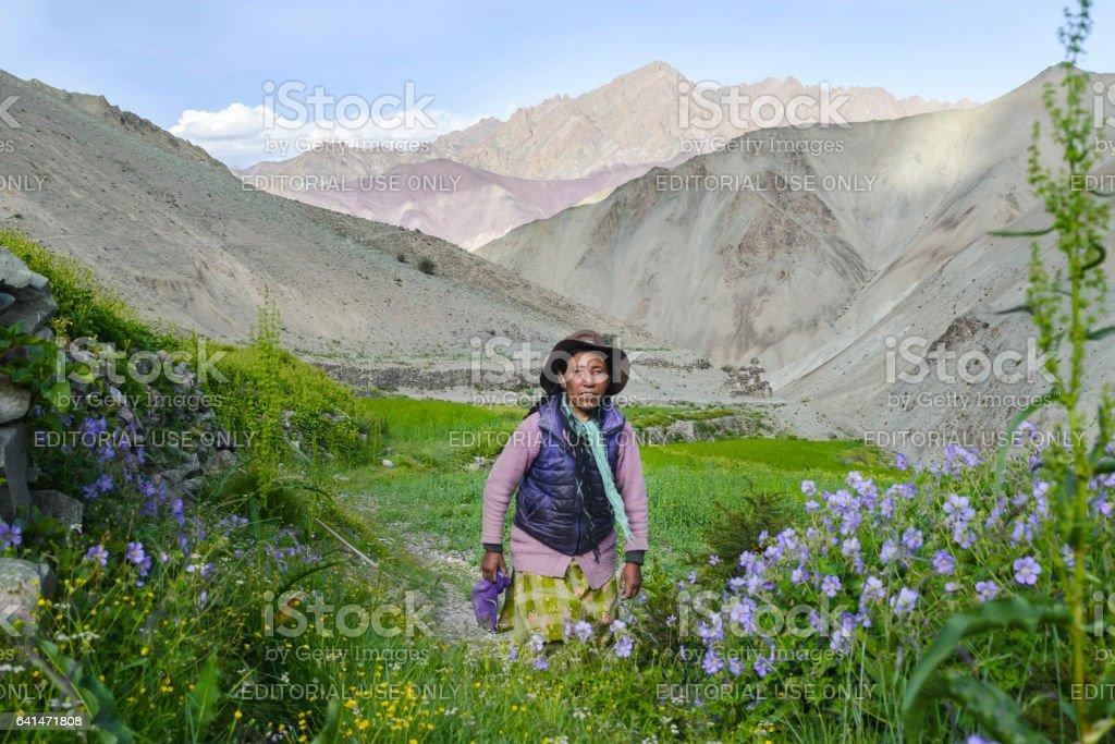 Landlady at Yurutse homestay in her gardening plot. Trekking in Markha valley (Ladakh, India) stock photo