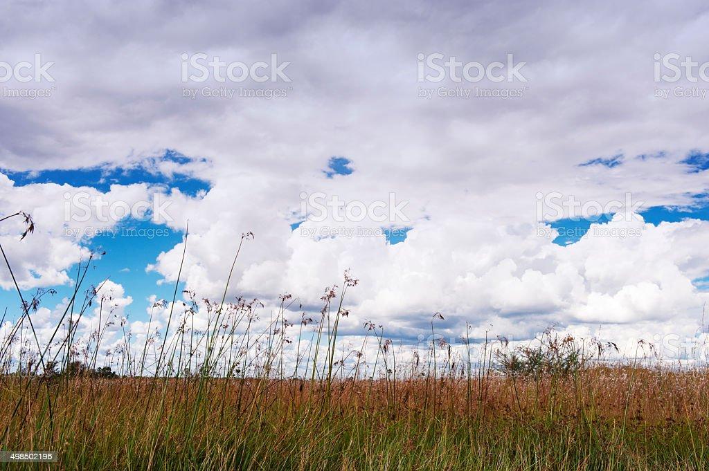 Landscape along the Selinda Spillway, Botswana stock photo