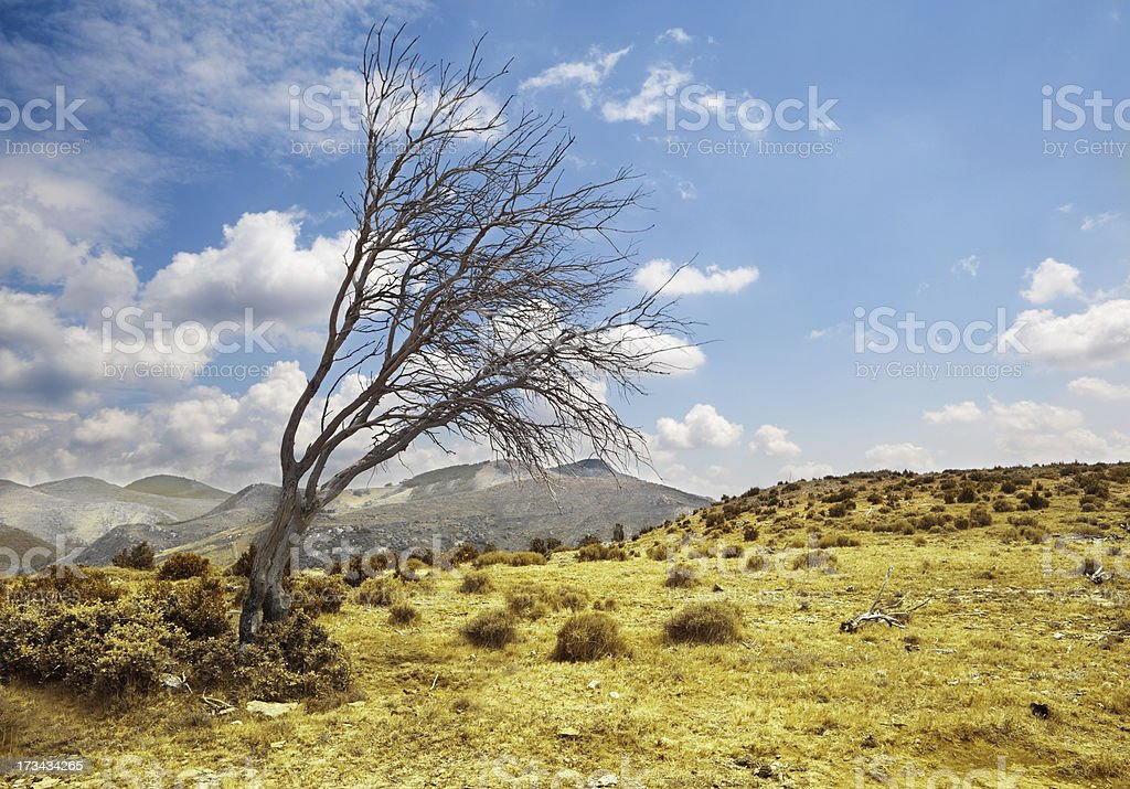landscape and lonely dry tree royalty-free stock photo