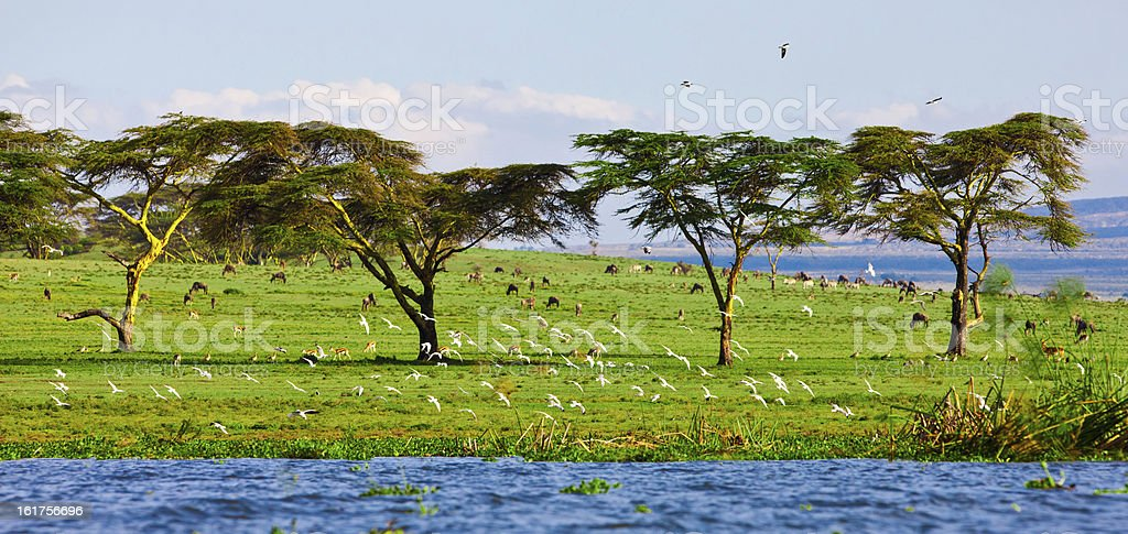 Landscape at Lake Naivasha in Kenya, Africa royalty-free stock photo