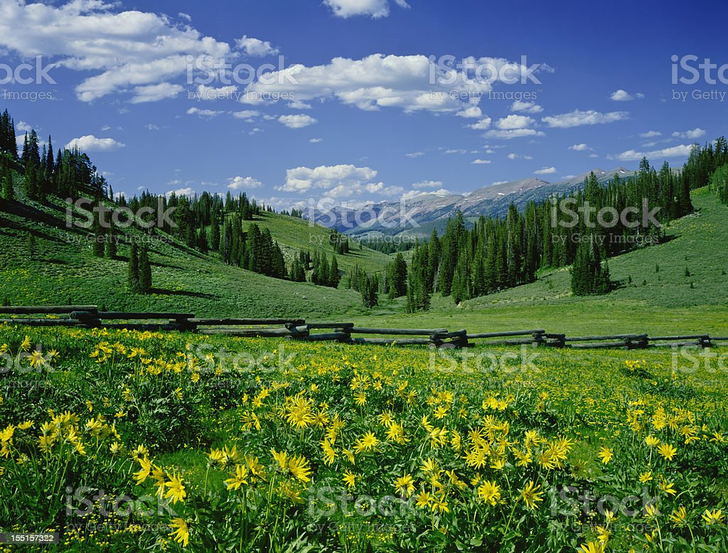 Landscape at the Alpine Meadow in Wyoming stock photo