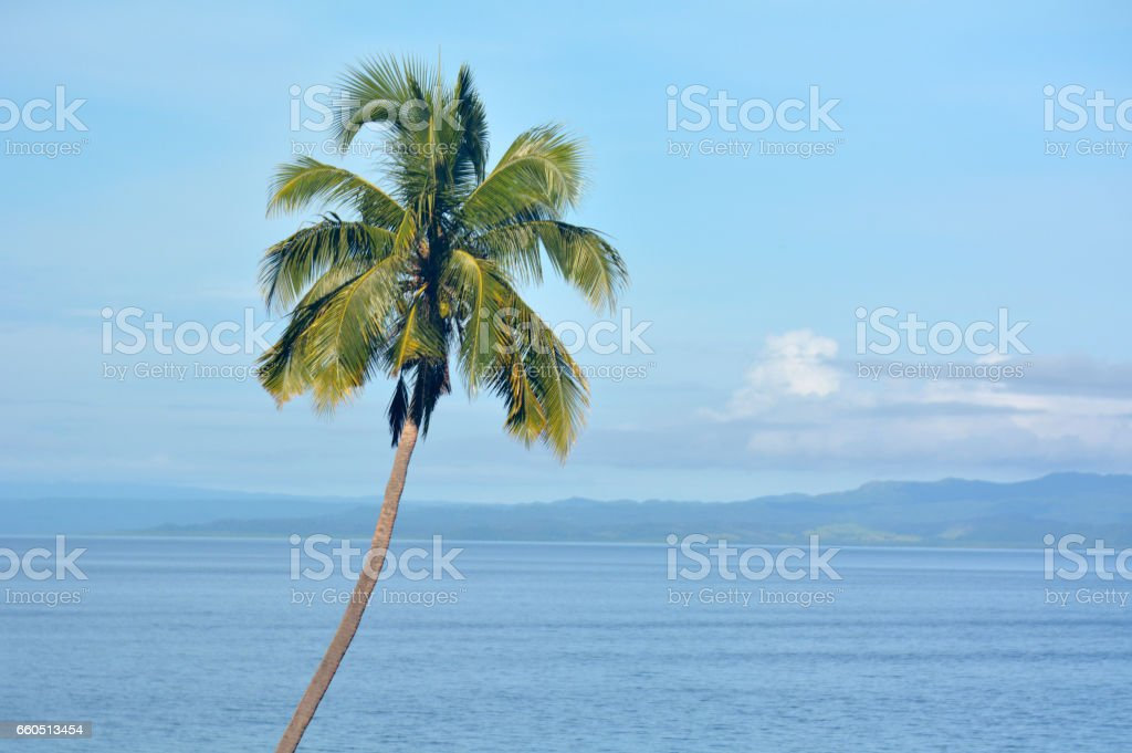 Landscape background of a tropical palm tree stock photo