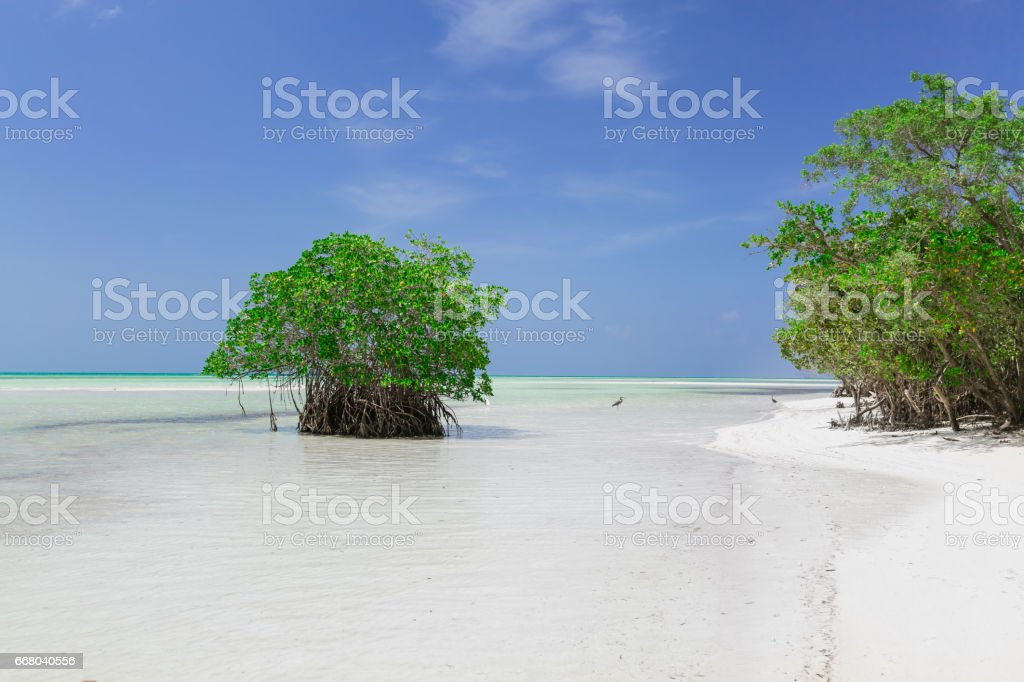 landscape background view of turquoise, tranquil ocean with green trees merging with clear beautiful sky at horizon line on sunny warm day stock photo