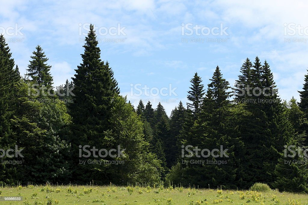 Landscape by summer of Haut-Jura in France stock photo