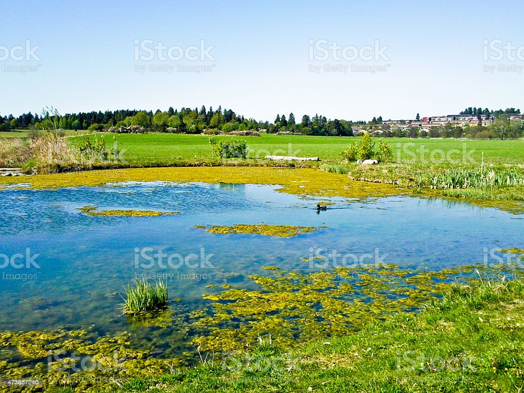 Landscape by the lake royalty-free stock photo