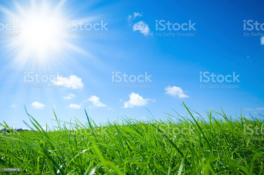 Landscape close-up of green grass under a bright blue sky royalty-free stock photo