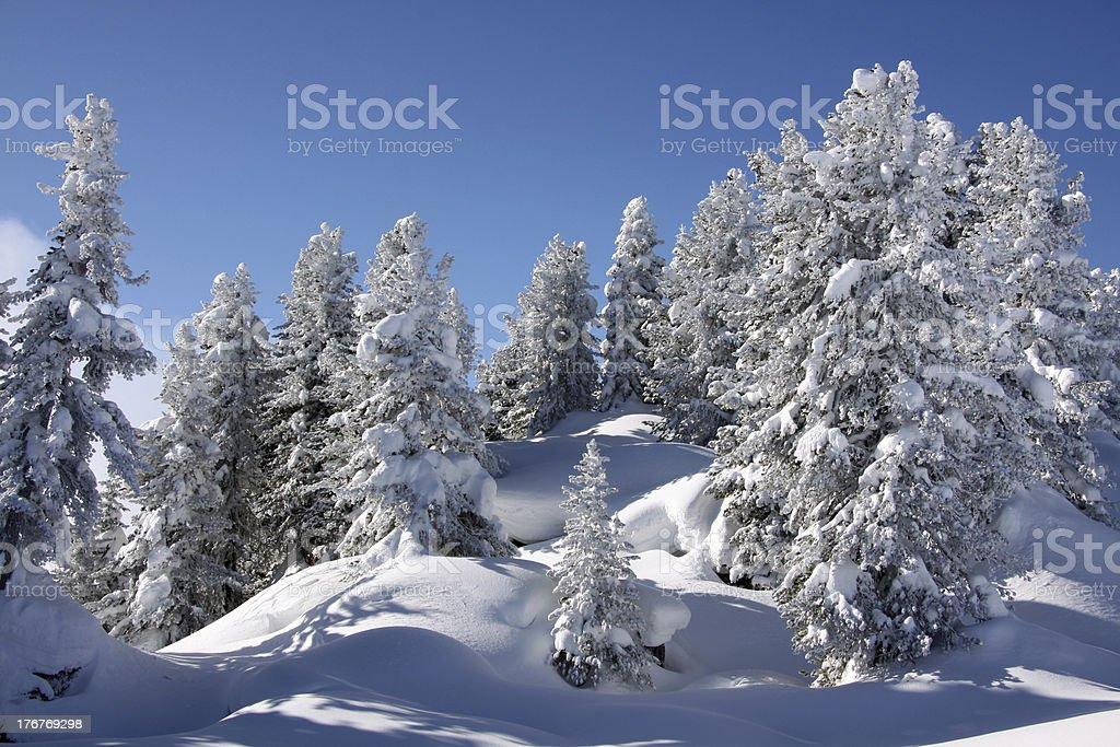 landscape covered with snow royalty-free stock photo