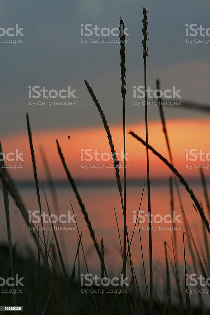 Landscape. Dawn on lake royalty-free stock photo