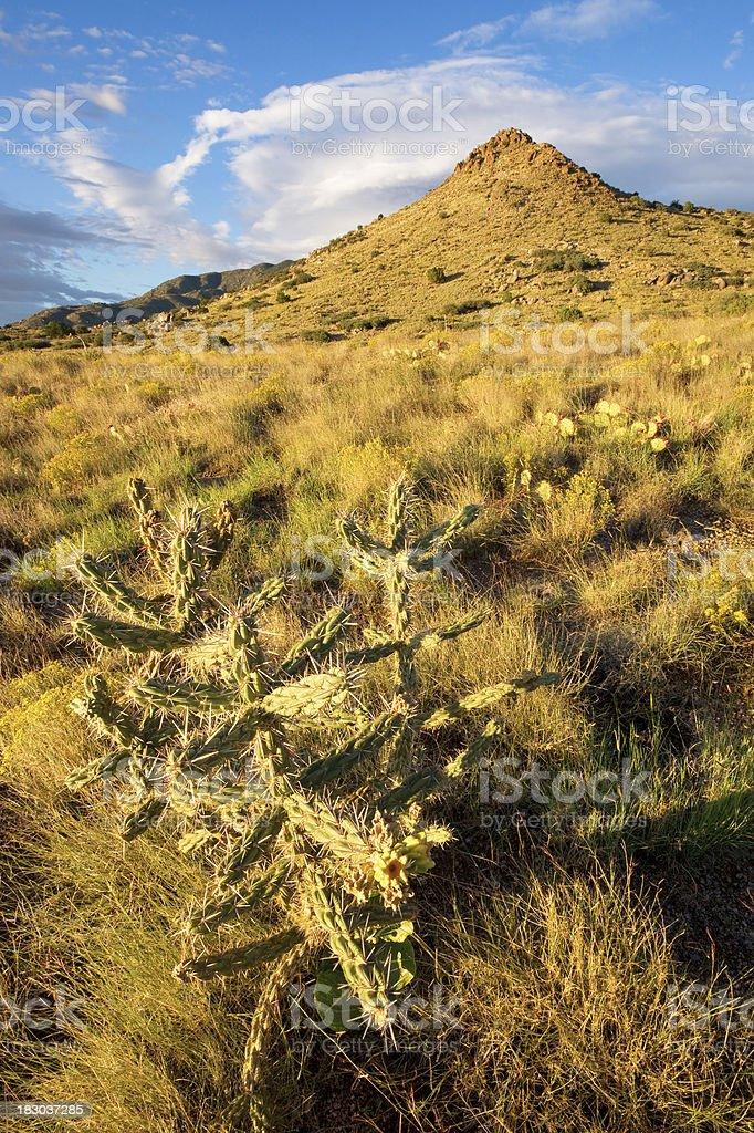 landscape desert cactus mountain sunset stock photo