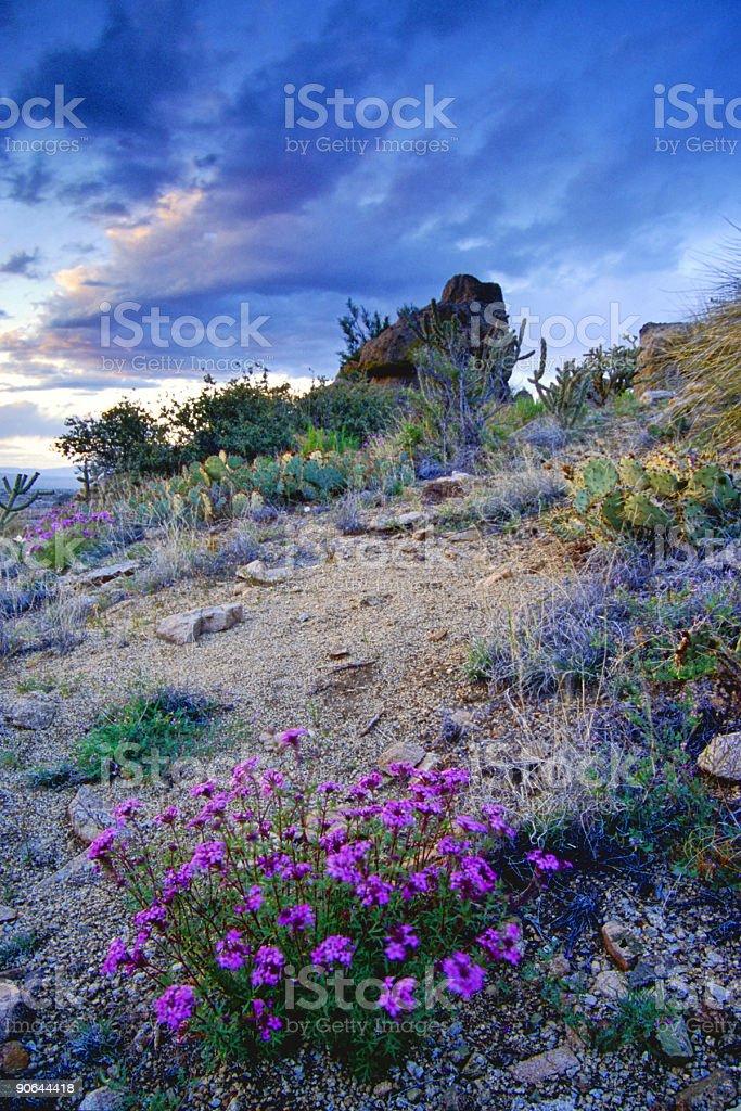 landscape desert wildflower sunset sky royalty-free stock photo
