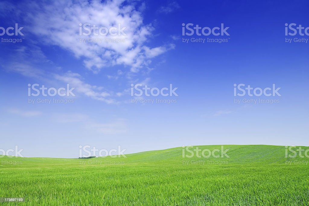 Landscape - Fields, the blue sky and white clouds royalty-free stock photo