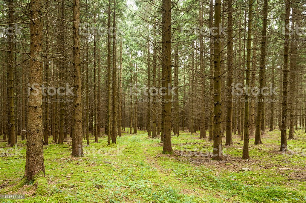 Landscape Forest royalty-free stock photo