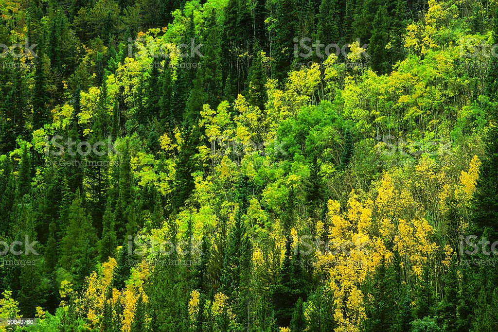 landscape forest trees stock photo