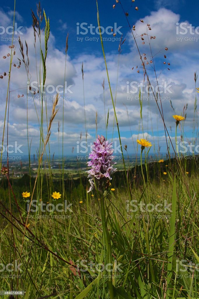 Landscape From an Insect Viewpoint. stock photo