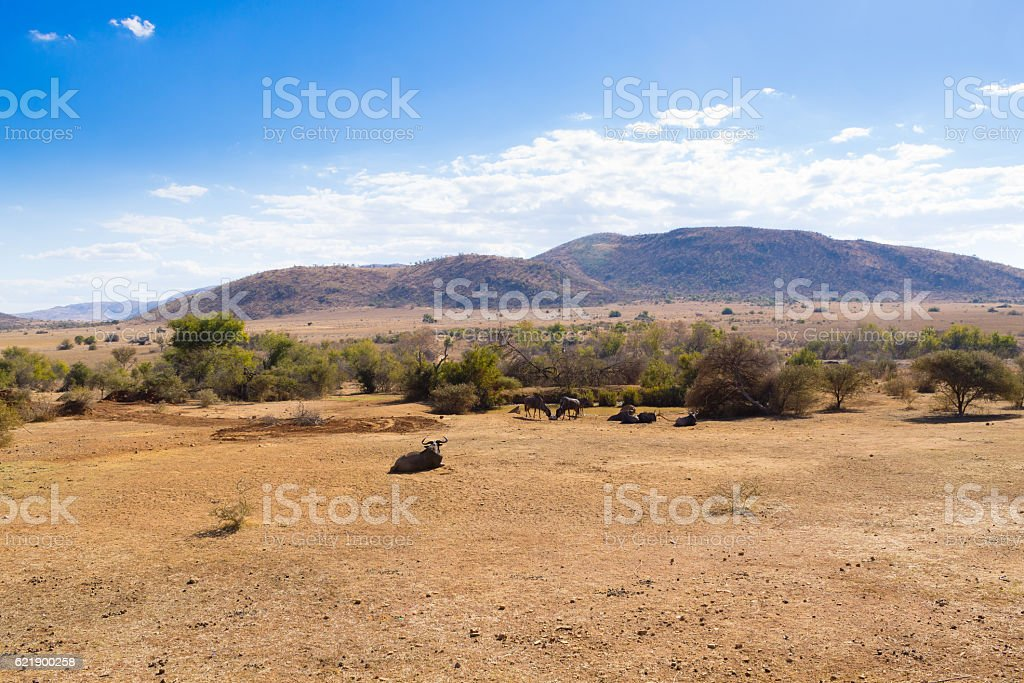 Landscape from Pilanesberg National Park, South Africa stock photo