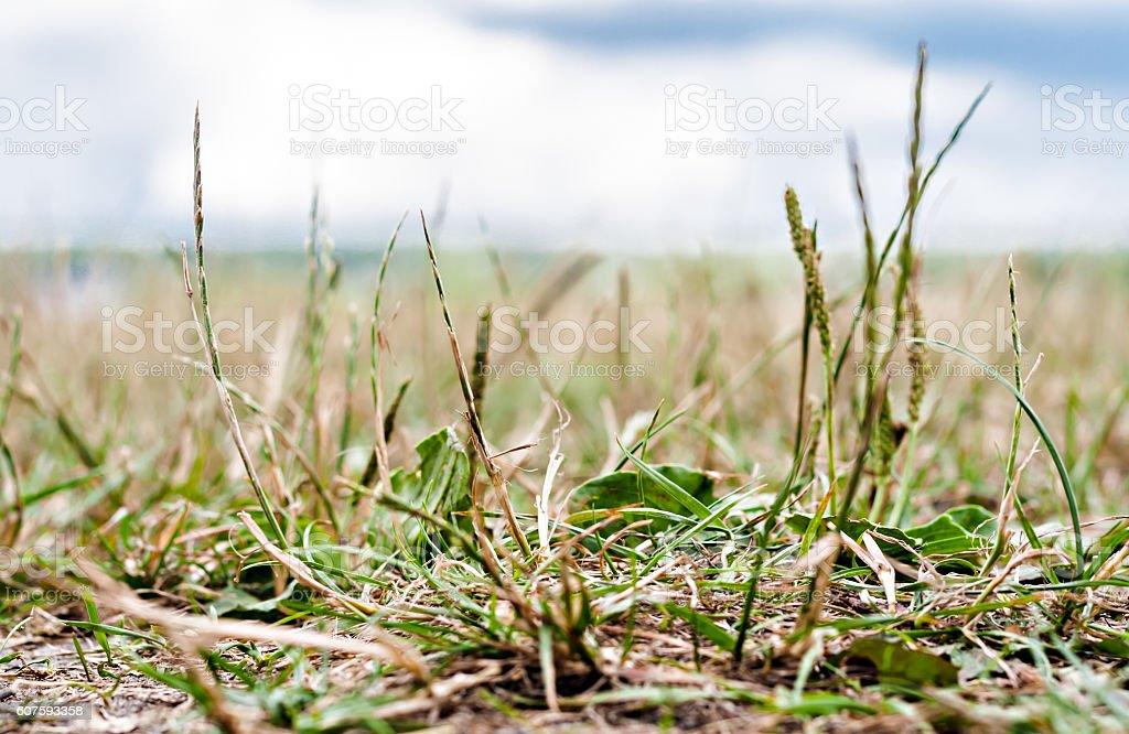 landscape grass bottom view close-up spring stock photo
