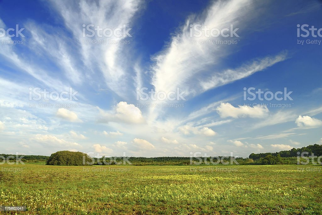 Landscape - green field and blue sky royalty-free stock photo