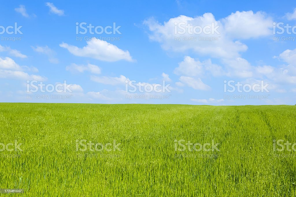 Landscape - Green Filed royalty-free stock photo