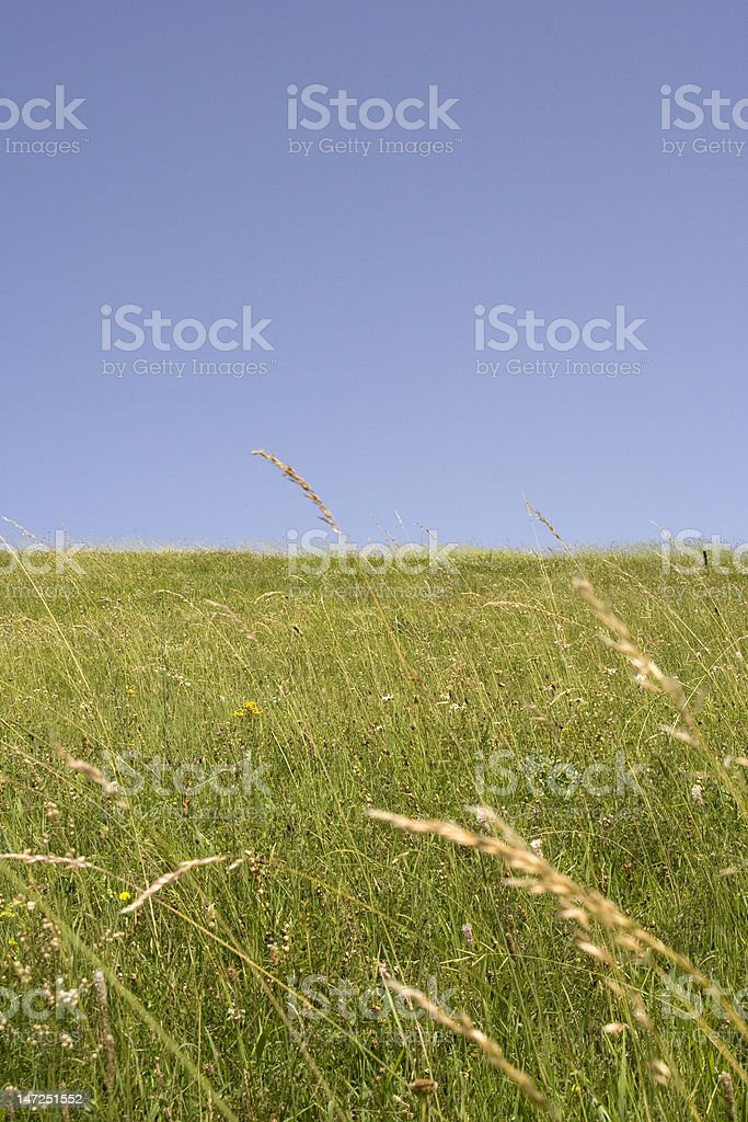 landscape - green land blue sky royalty-free stock photo