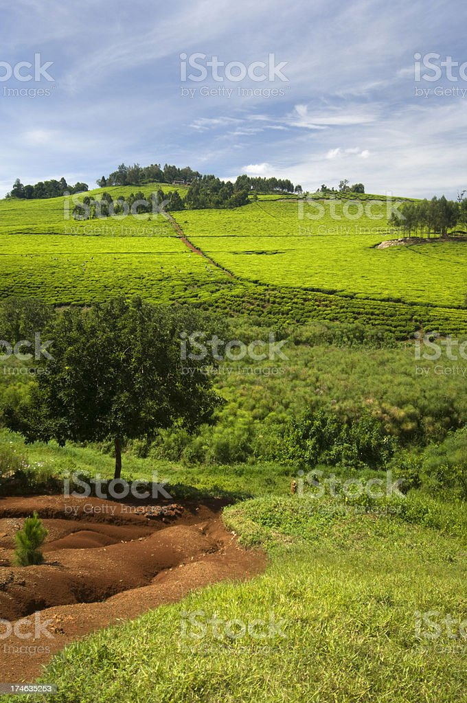 Landscape in Africa royalty-free stock photo
