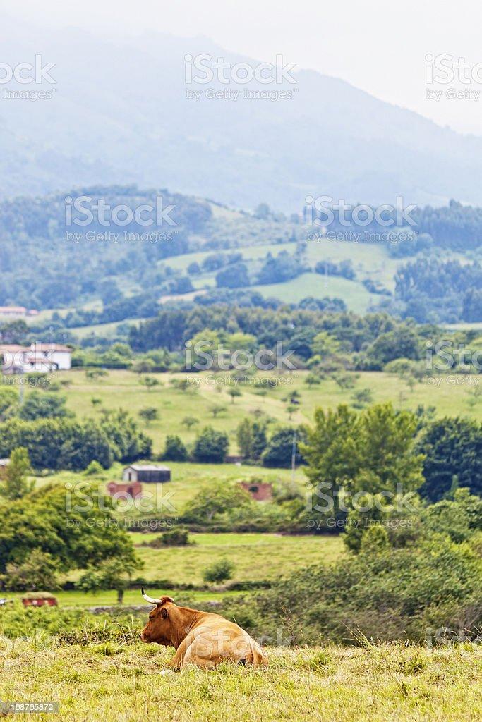 Landscape in Asturias stock photo