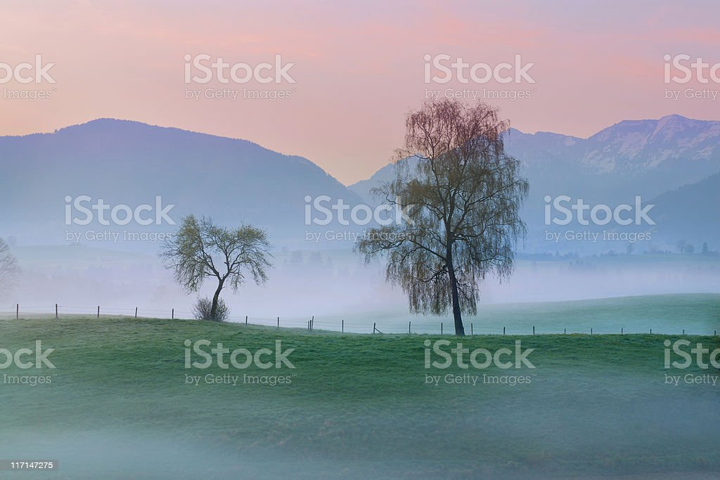 landscape in bavaria, mist, two single trees- allgau - germany stock photo