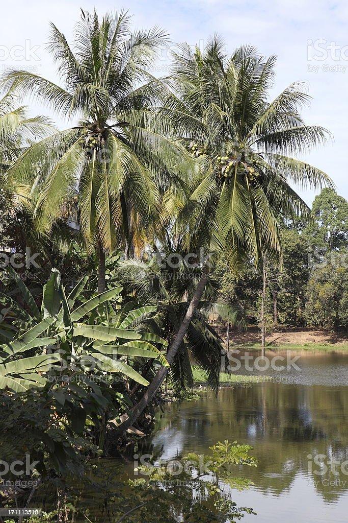 Landscape in Cambodia stock photo