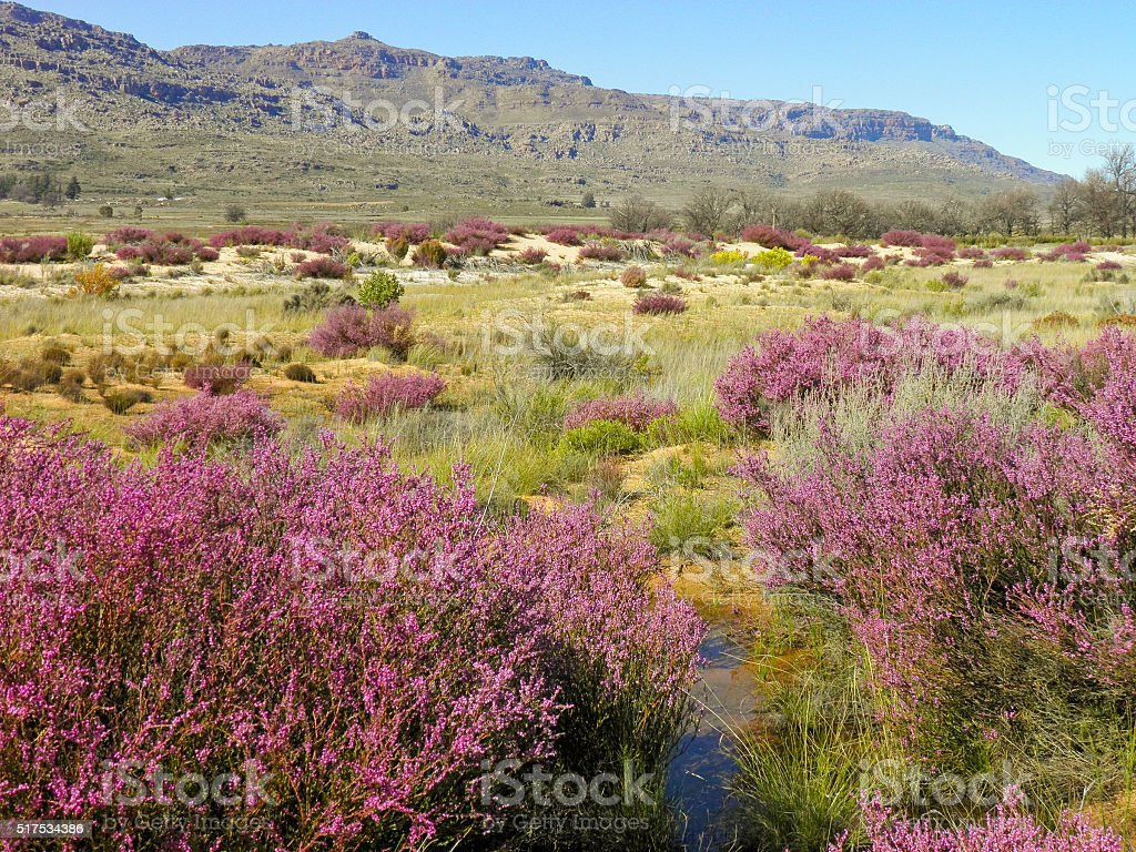 Landscape in Cederberg nature reserve, South Africa stock photo