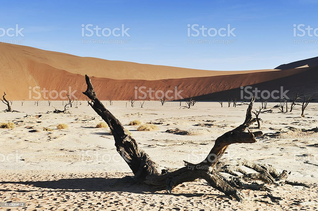 Landscape in Dead Vlei near Sossusvlei,Namibia stock photo