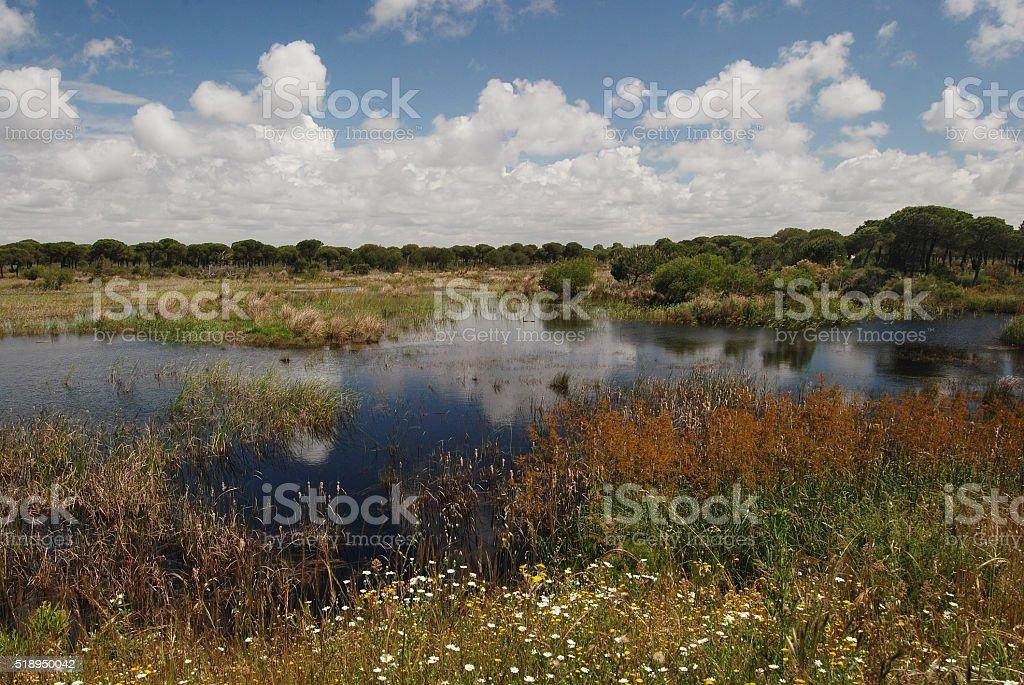 Landscape in Donana National Park, Spain stock photo