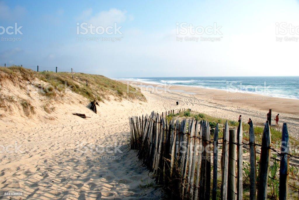 Landscape in Landes region in France stock photo