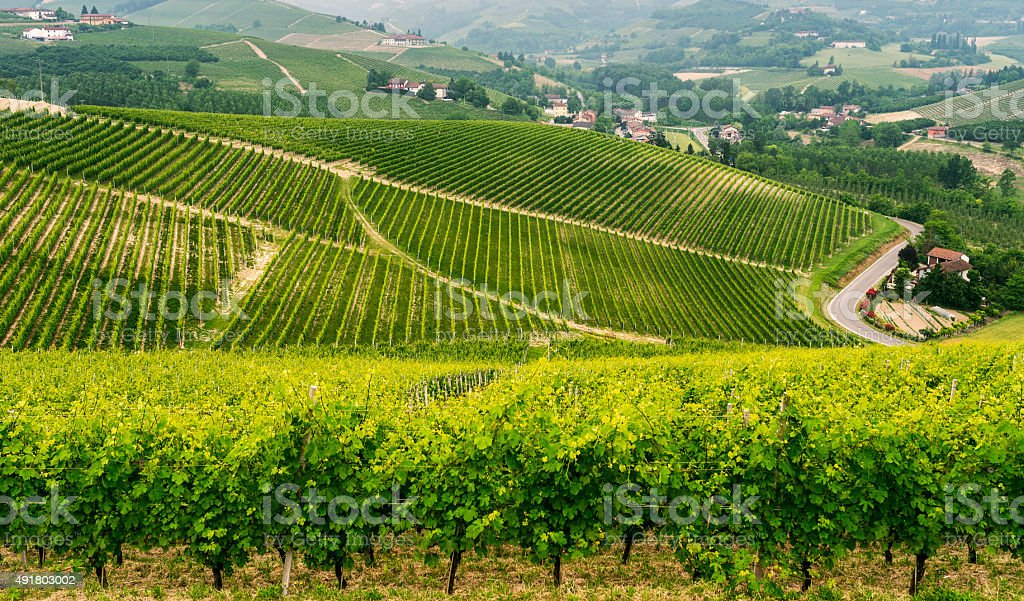 Landscape in Langhe (Piedmont) stock photo
