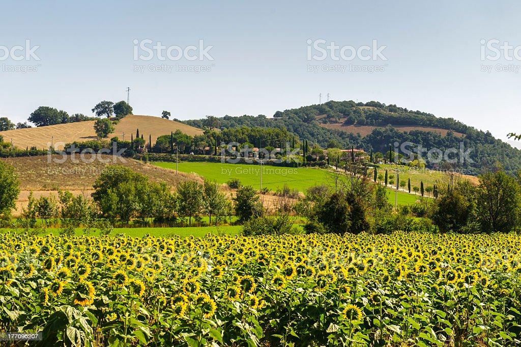 Landscape in Maremma (Tuscany) royalty-free stock photo