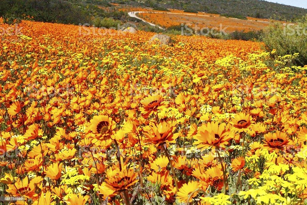 landscape in namaqualand national park stock photo